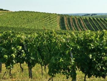 Bourgogne-Pano.jpg